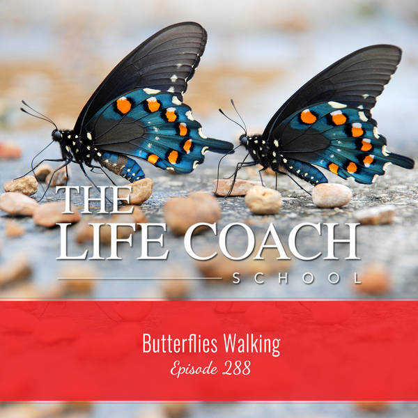 Ep #288: Butterflies Walking