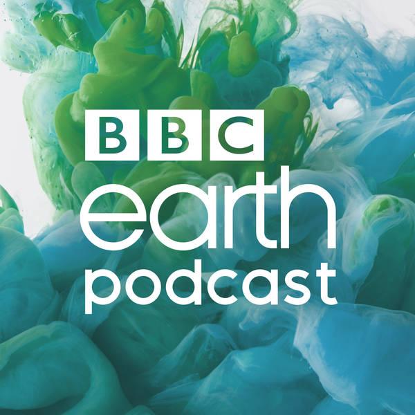 BBC Earth Podcast image