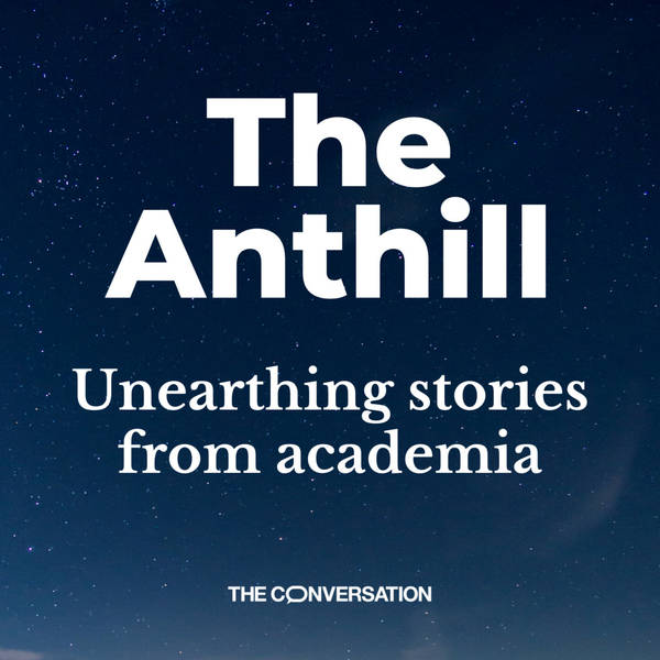 The Anthill image