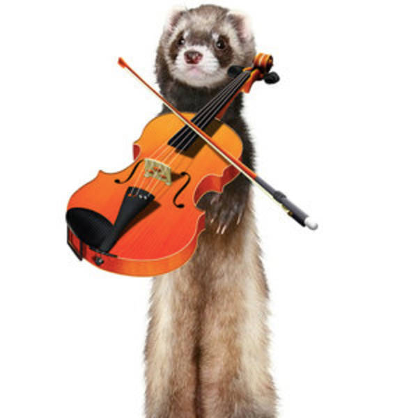 What if a ferret chewed on a cookie in an orchestra?