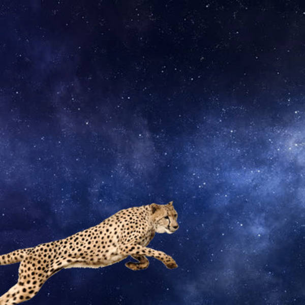 What if cheetahs could jump the sky and never fall down?
