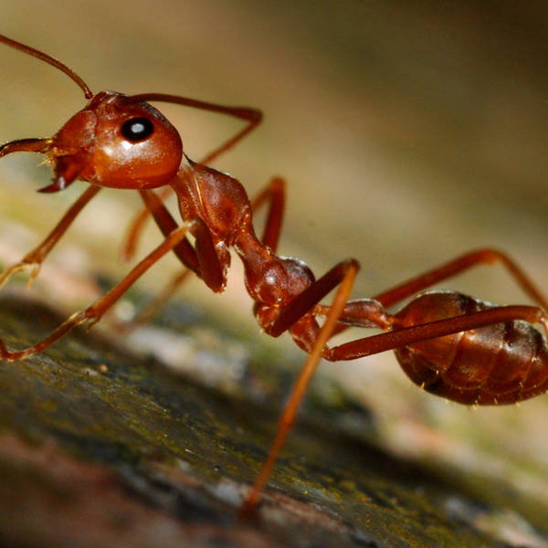 The Tale of How Ants Conquered the Earth with Corrie Moreau