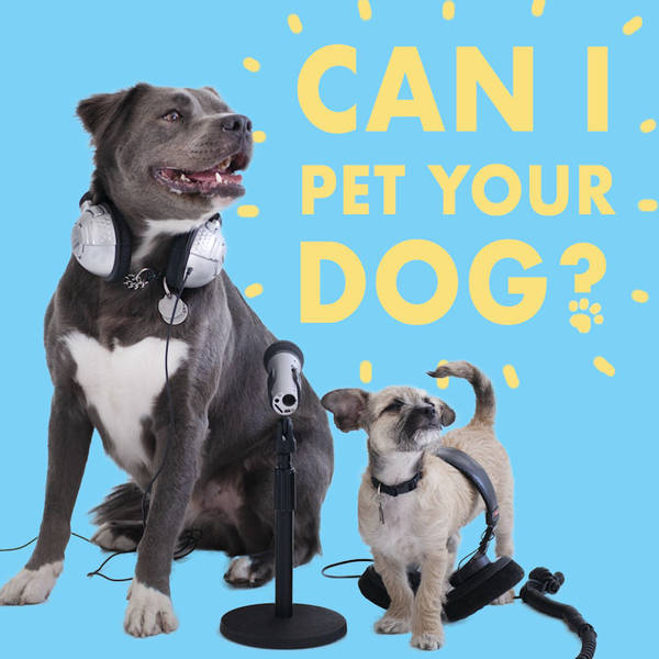 CIPYD 167: Nervous Leashes and Dog Sniffing