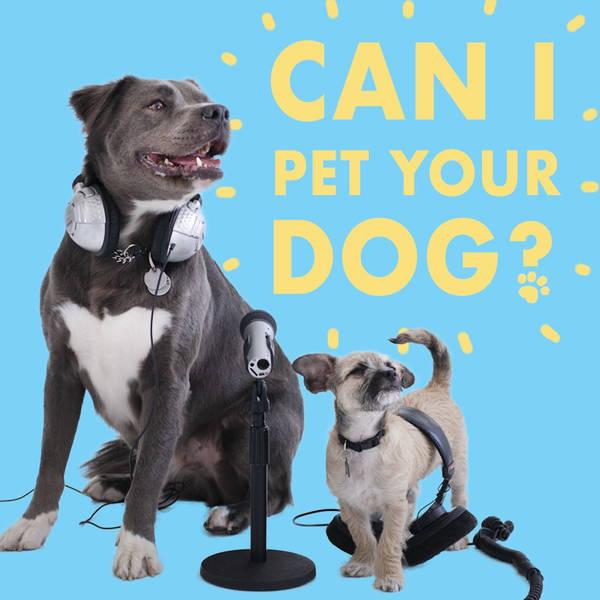 CIPYD 124: Ben Harrison and the Dandie Dinmont Terrier