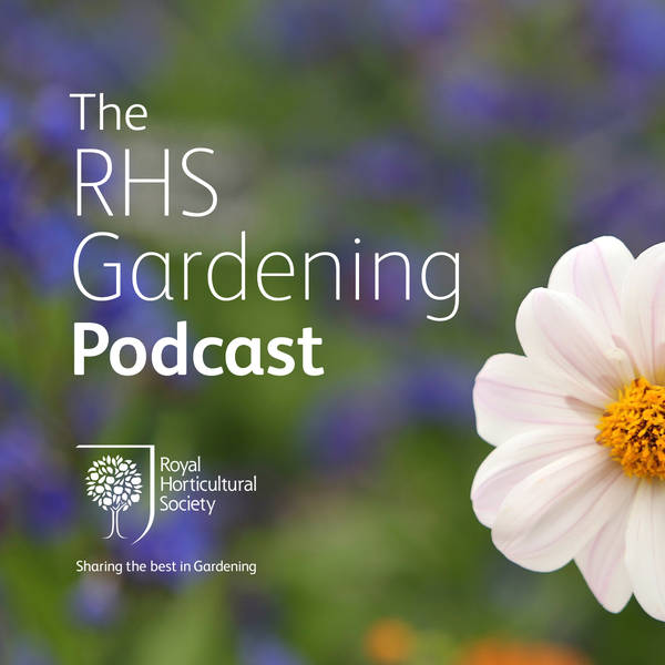 Episode 105: Jo Malone at Chelsea, misbehaving wisteria, tomato questions answered.