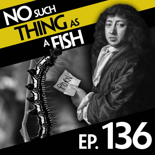 136: No Such Thing As A Wolf Diving For Clams
