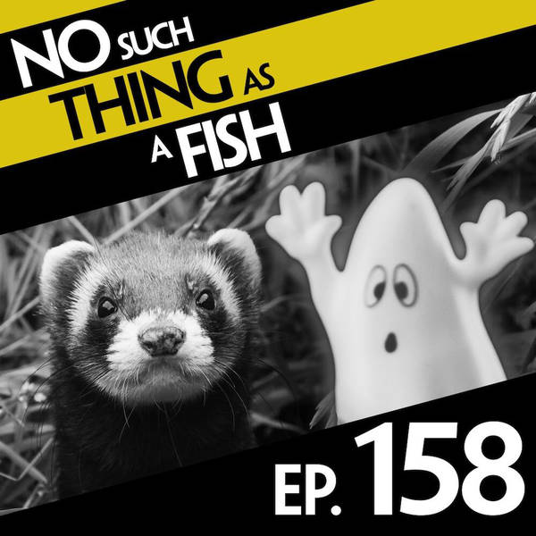 158: No Such Thing As A Weasel's Fridge