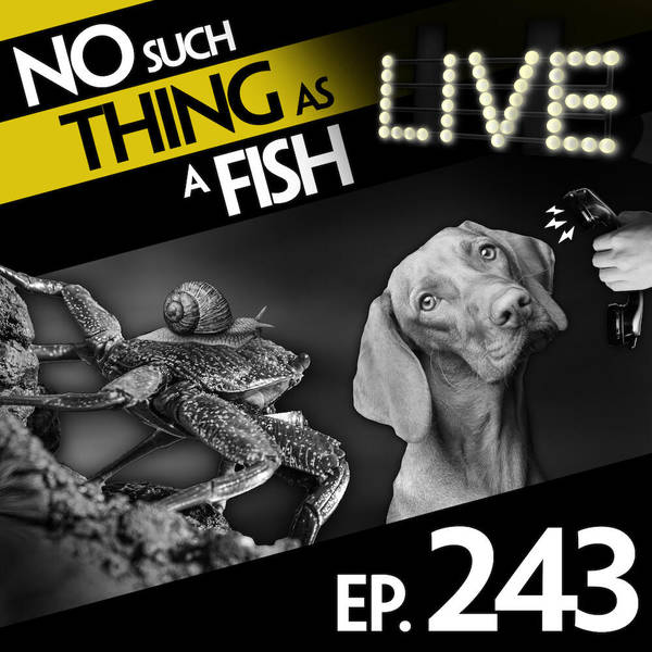 243: No Such Thing As Jean-Paul Sartre's Crabs