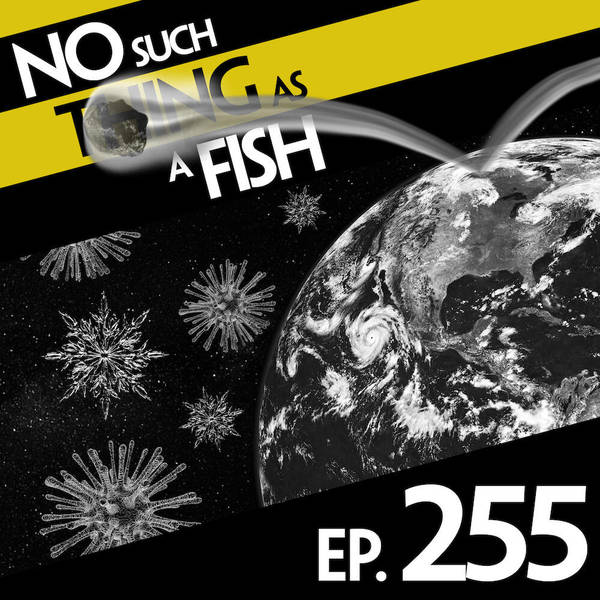 255: No Such Thing As A Bouncy Asteroid