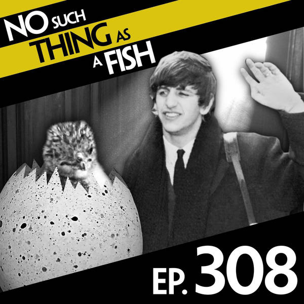 308: No Such Thing As The Land Of Flying Sheep