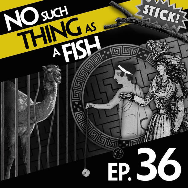 36: No Such Thing As A Game Of King's Footsie