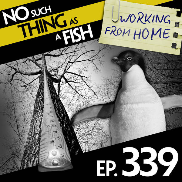 339: No Such Thing As A Penguin in a Nightclub
