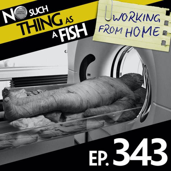 343: No Such Thing As A Dolphin In An Escape Room