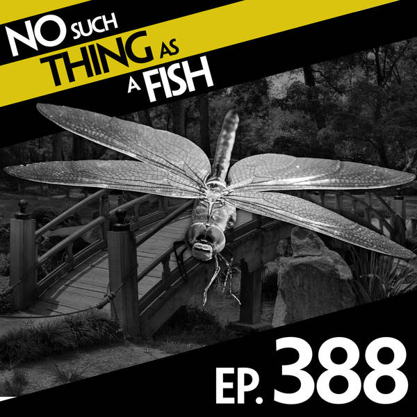 388: No Such Thing As A Danquito