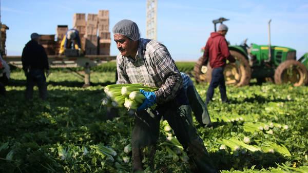 The Farm Labor Drought