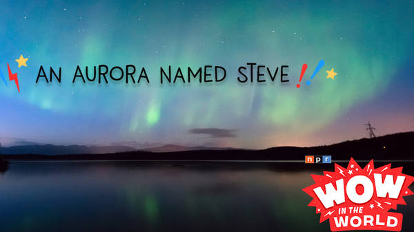 An Aurora Named Steve