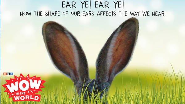 EAR YE! EAR YE! How The Shape Of Our Ears Affects The Way We Hear!
