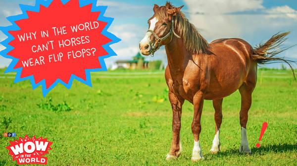 Why Horses Can't Wear Flip Flops