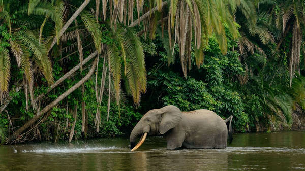 Deep Learning With The Elephants