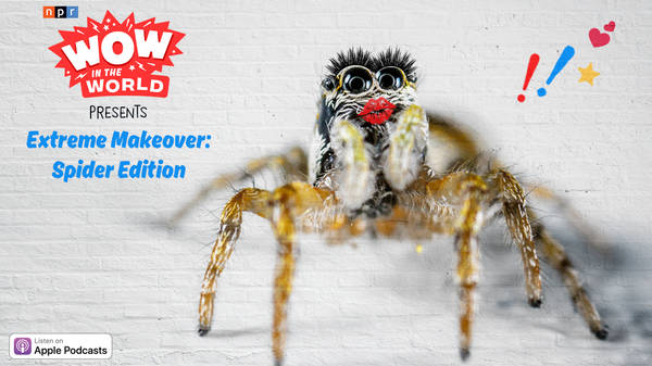Extreme Makeover: Spider Edition