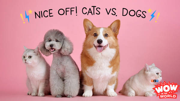 Nice-Off! Cats Vs. Dogs