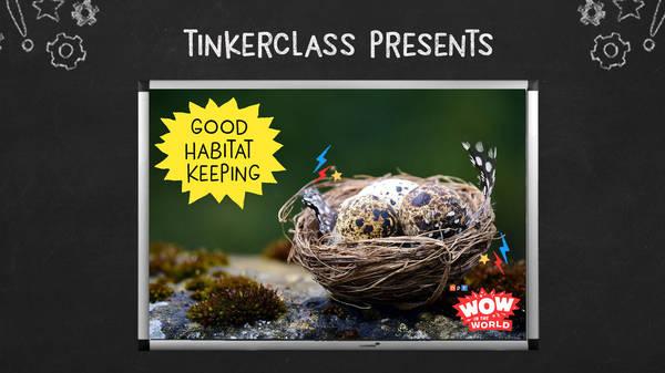 Tinkerclass (Week 3 Day 1): Good Habitat Keeping