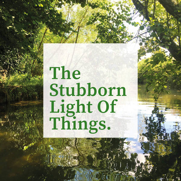The Stubborn Light of Things image