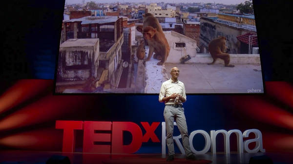 How animals and plants are evolving in cities   Menno Schilthuizen