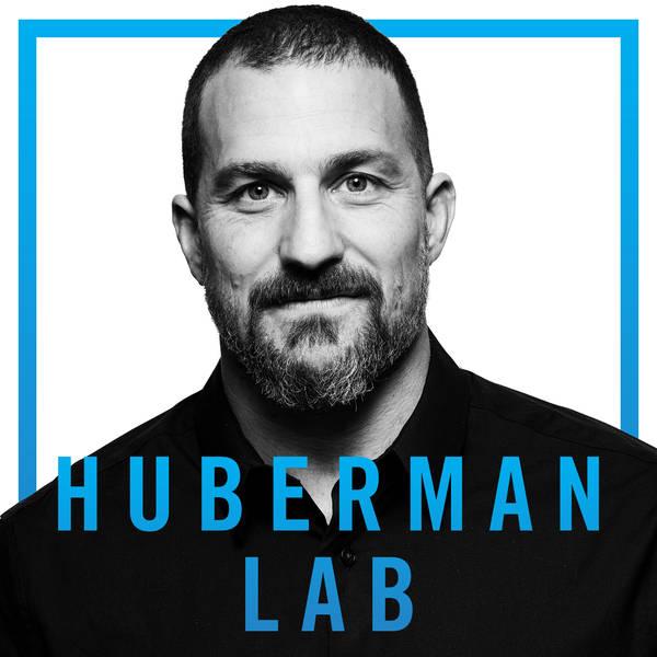 Huberman Lab image